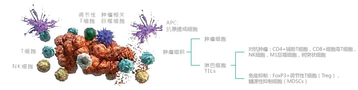 肿瘤浸润淋巴细胞(TILS)疗法