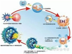 PD-1、Cart免疫疗法引领抗癌革命