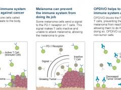 PD-1抗癌药物OPDIVO®(nivolumab)的作用机理是什么?