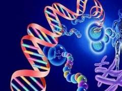 惊!科学家首次发现胰腺癌耐药机制—药物被细菌吃掉了!
