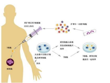 脐血干细胞
