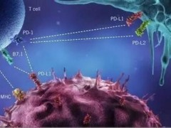 PD-1治疗癌症 生存率和缓解率数据总览!(KEYTRUDA)