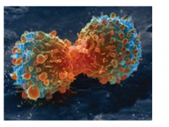 肿瘤患者新年大礼|又一PD-1抑制剂获得CFDA受理