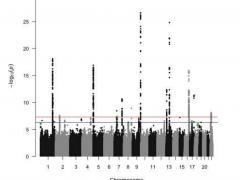 胰腺癌风险高原来与这5种新基因变化有关