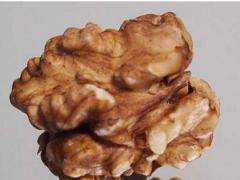 又一研究证明核桃减少结直肠癌发病
