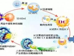 国内肿瘤细胞免疫治疗方兴未艾——新一代MTCA-CTL技术问世!