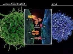 新的癌症免疫疗法技术可以特异性靶向杀伤肿瘤细胞!