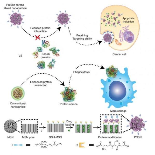 纳米技术抗癌取得巨大突破1