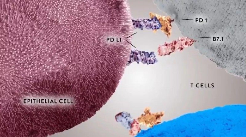 PD-L1与PD-1握手躲避免疫系统追杀