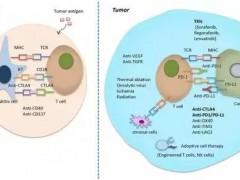 肝癌最新免疫治疗进展大盘点