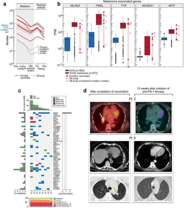 肺癌疫苗治疗效果
