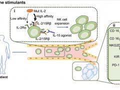 NK细胞免疫疗法,NK细胞疗法,新NK细胞治疗技术证实抗癌成功