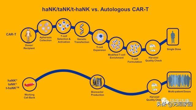 haNK细胞治疗技术