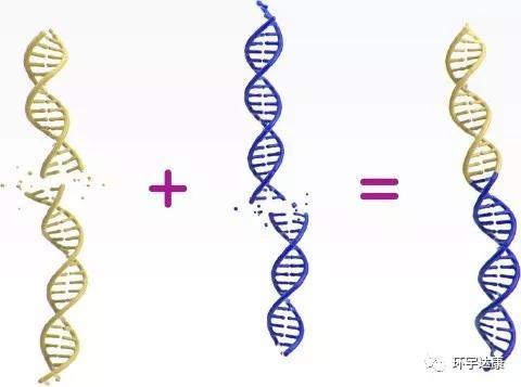 TPM3和NTRK1基因发生了融合