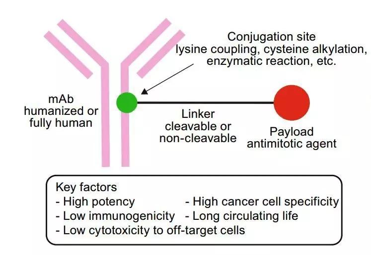 抗体偶联药物结构模式