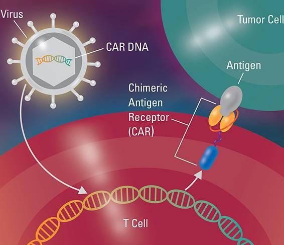 CAR-T细胞疗法的工作原理
