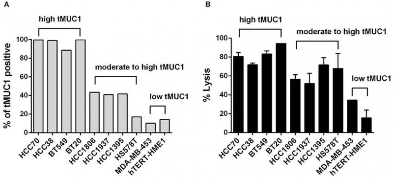 CAR-T细胞以抗原依赖性方式在体外裂解TNBC肿瘤细胞