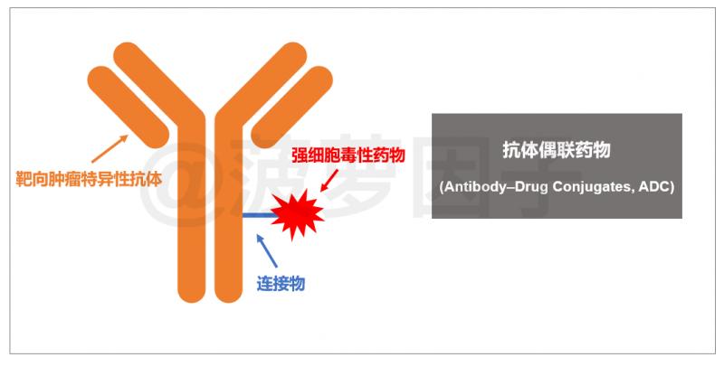 抗体偶联药物