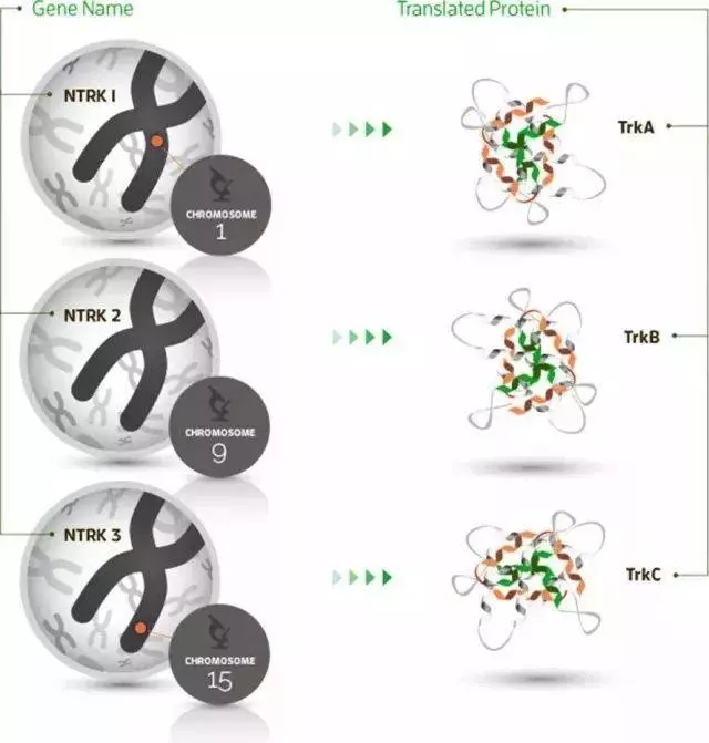 NTRK基因