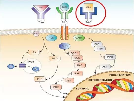 NTRK基因融合