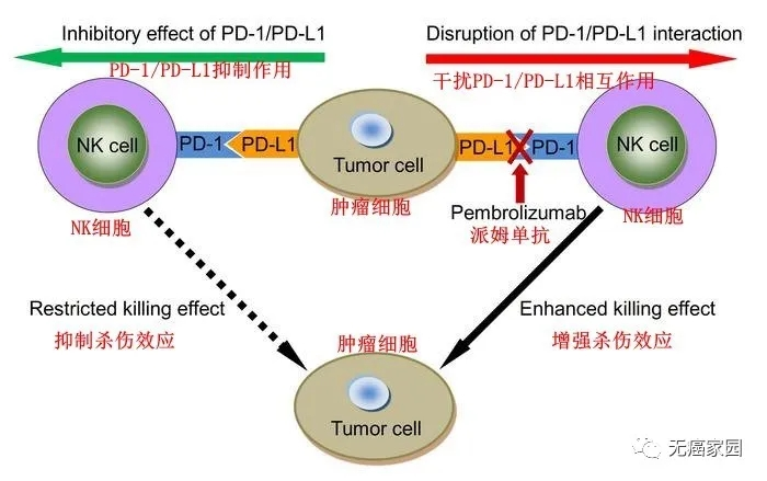 国内非小细胞肺癌NK细胞免疫疗法联合免疫疗法(PD-1)治疗数据出炉