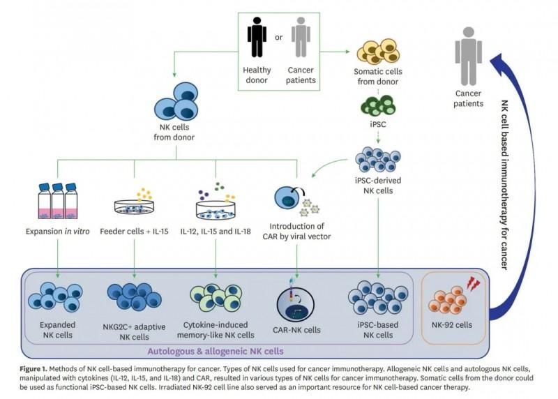 NK细胞回输过程