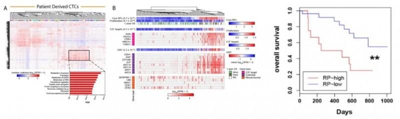 PR基因高表达的患者,总生存期更短