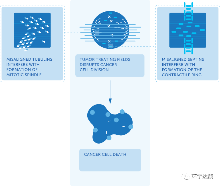 电场疗法阻断癌细胞分裂
