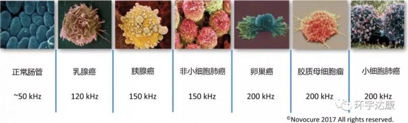 不同的细胞类型对应不同频率的交变电场