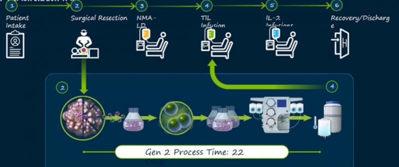 tils疗法细胞制备流程