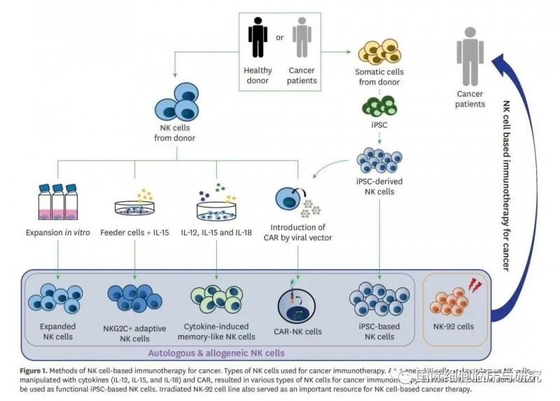 自体及异体NK细胞回输流程
