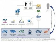 """NK细胞免疫疗法和免疫检查点抑制剂双免疫联合治疗""""跨界""""联手、强力合击"""