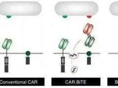 脑瘤CAR-T细胞治疗,CART治疗,CART细胞免疫疗法新突破
