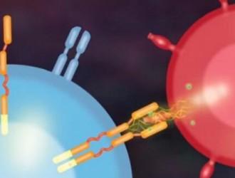 国内多项实体瘤CAR-T细胞治疗,CAR-T细胞疗法临床试验招募患者啦