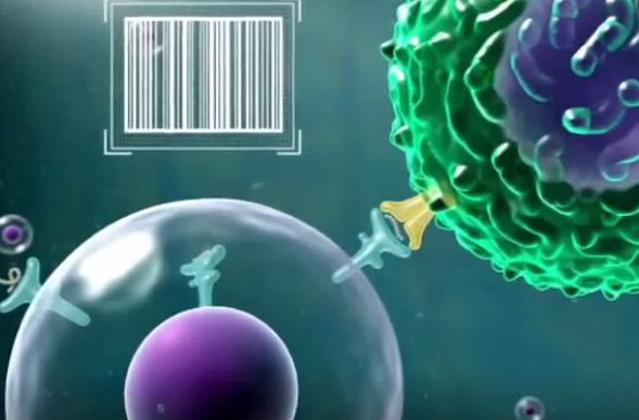 TCR-T细胞