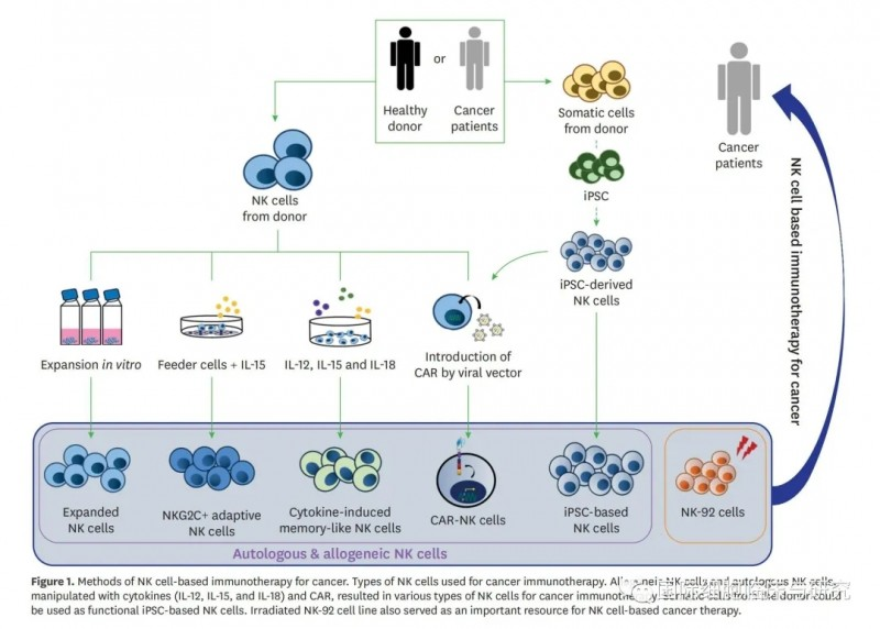 NK细胞制备流程