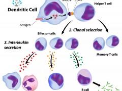 NK细胞免疫疗法,NK细胞治疗,NK细胞疗法,NK疗法有望成为免疫治疗界的新宠