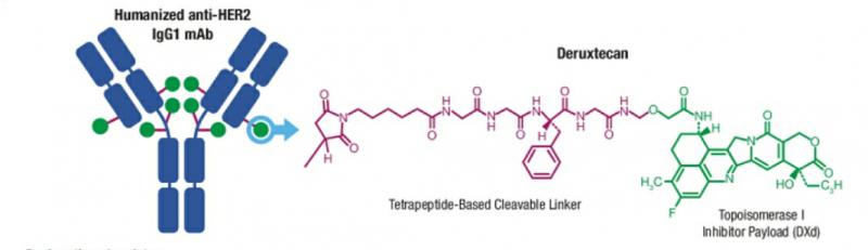 2胃癌新药DS8201分子式