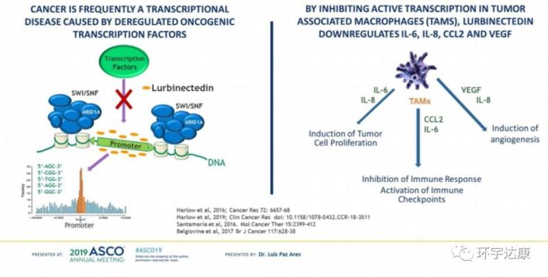 广谱抗癌新星--Lurbinectedin