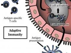 卵巢癌疫苗,卵巢癌树突状细胞疫苗DCVAC/OvCa