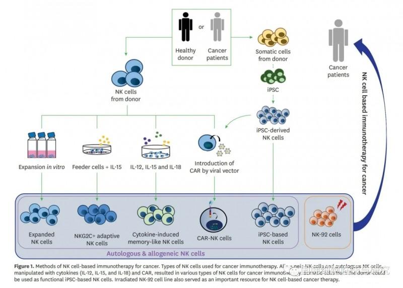 NK细胞治疗过程