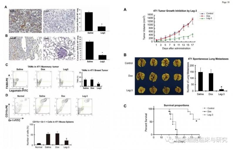 莱古比星联合PD-1小鼠治疗效果