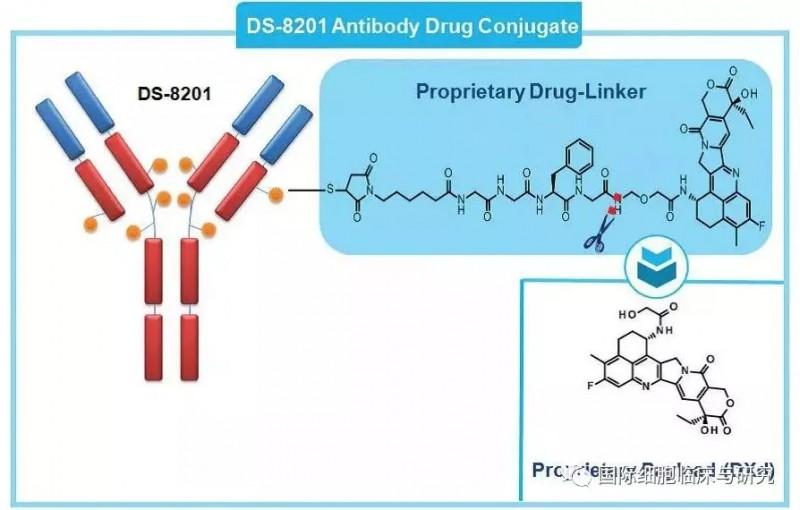 DS-8201分子设计结构