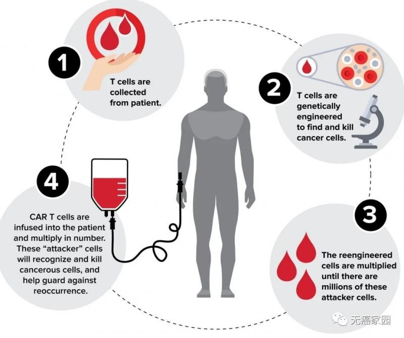CAR-T 细胞疗法的一般流程