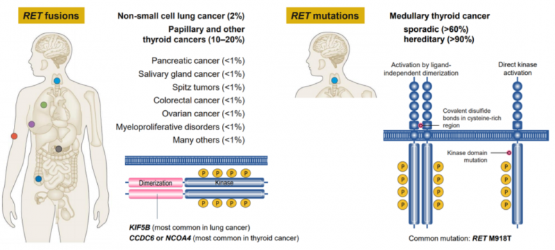 各癌种RET基因融合突变的概率