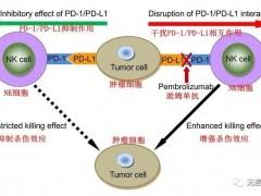 肺癌细胞免疫治疗,晚期肺癌NK细胞免疫疗法治疗效果势不可挡