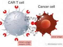 复发或难治性滤泡性淋巴瘤CAR-T细胞免疫治疗,诺华CAR-T细胞免疫疗法Kymriah即将获批第三个适应症