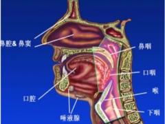 头颈部肿瘤质子放疗对比传统头颈部肿瘤放疗的优势和效果如何