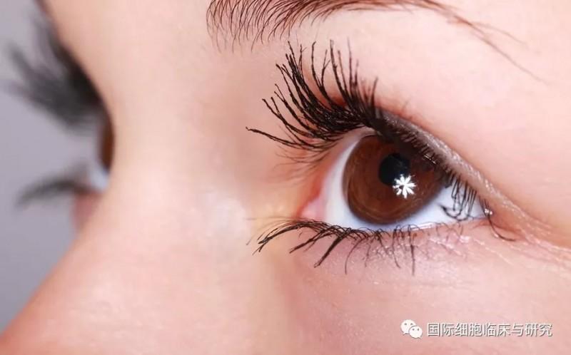恢复健康视力有望!自体干细胞重建受损眼角膜,美国再开先河!
