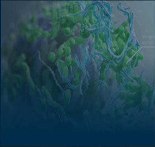 TIL细胞组织精准筛选培养